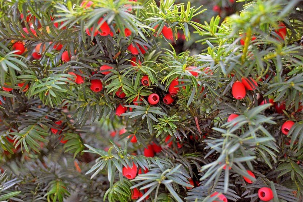 De beste planten voor een gave haag