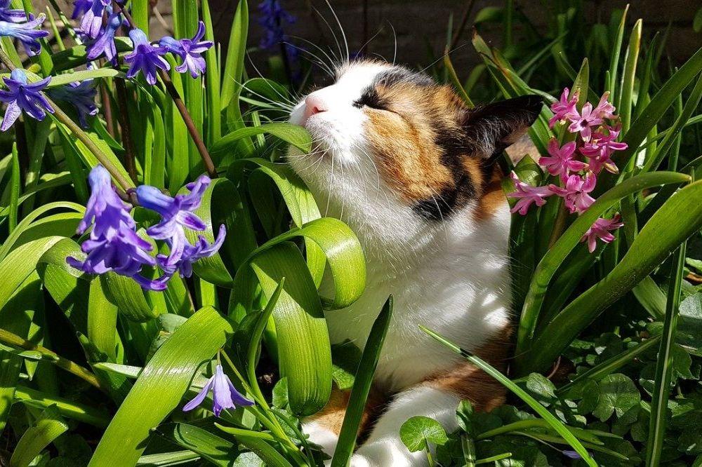 Deze planten zijn niet gevaarlijk voor je huisdier