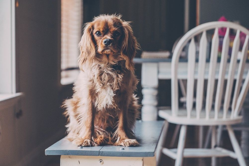 Een gezellige thuis voor jou en je hond