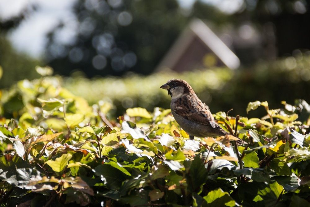 Een vogelvriendelijke tuin aanleggen 4 tips