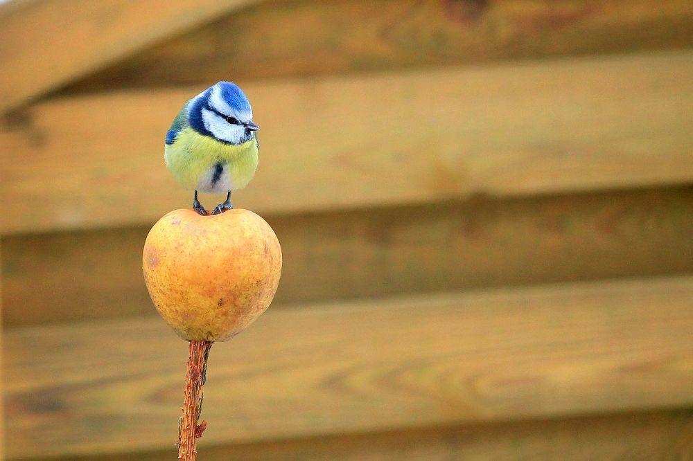 Haal het maximale uit een kleine tuin