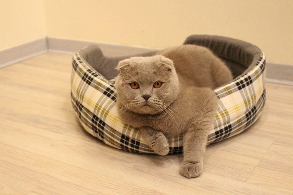 Hoe creëer je een gezellig huis voor jou en je kat