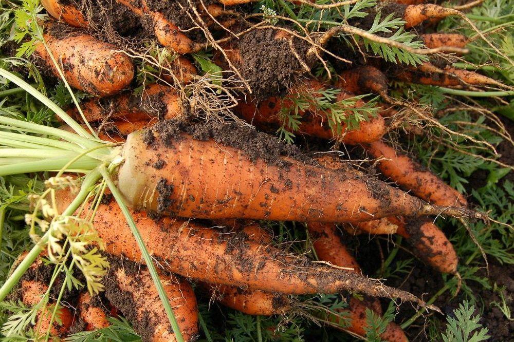 Succesvol groenten kweken voor beginner