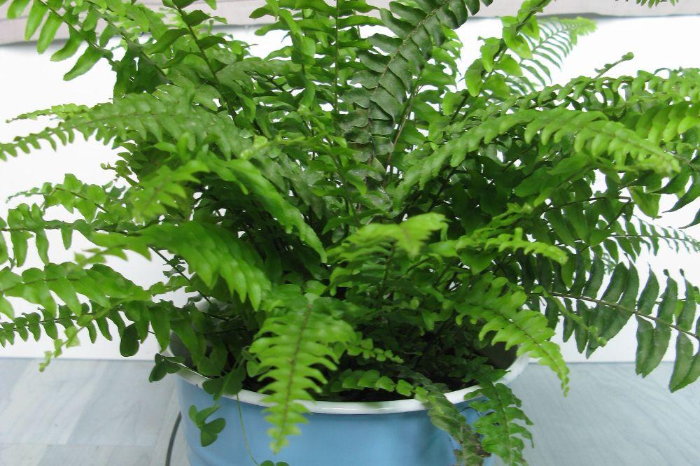 Veilige planten voor kleine onderzoekertje