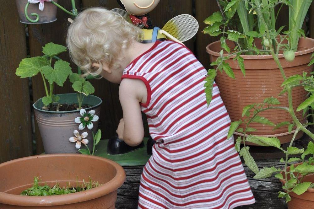Veilige planten voor kleine onderzoekertjes