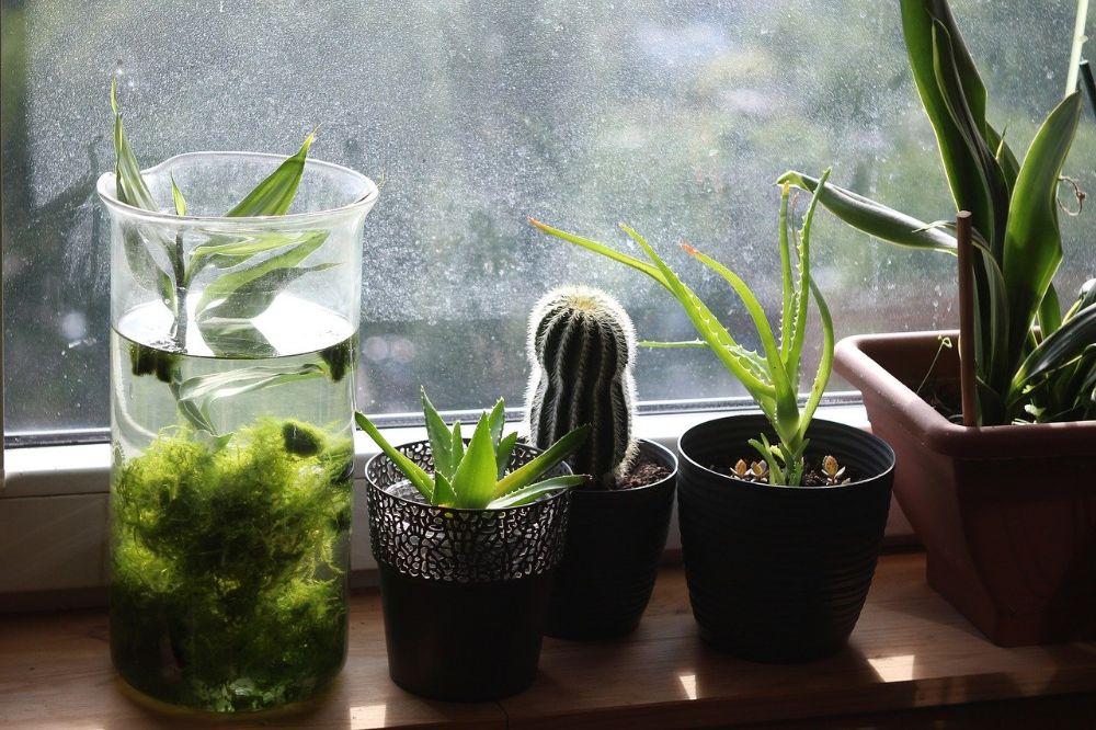 Zo verzorg je je kamerplanten optimaal